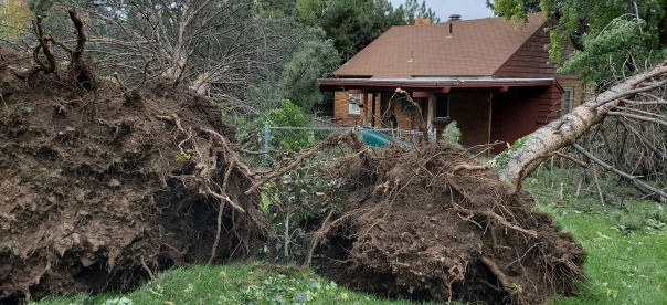 This is my uncle's house. Three trees fell to either side of his property, causing damage only to fences. Guess he rolled a natural 6.